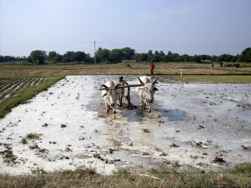 Arbeit auf den Gebieten - Indien lizenzfreie stockfotos