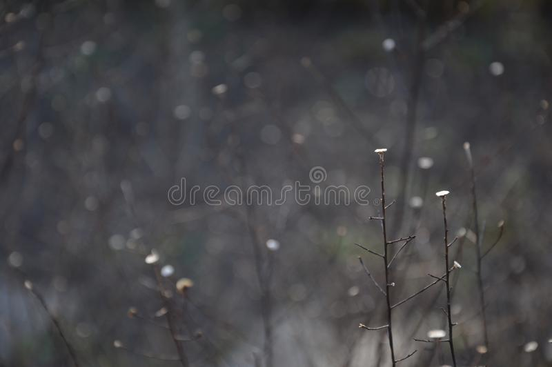 Arbeiten Sie am Ende des Winterwartefrühlinges im Garten stockfoto