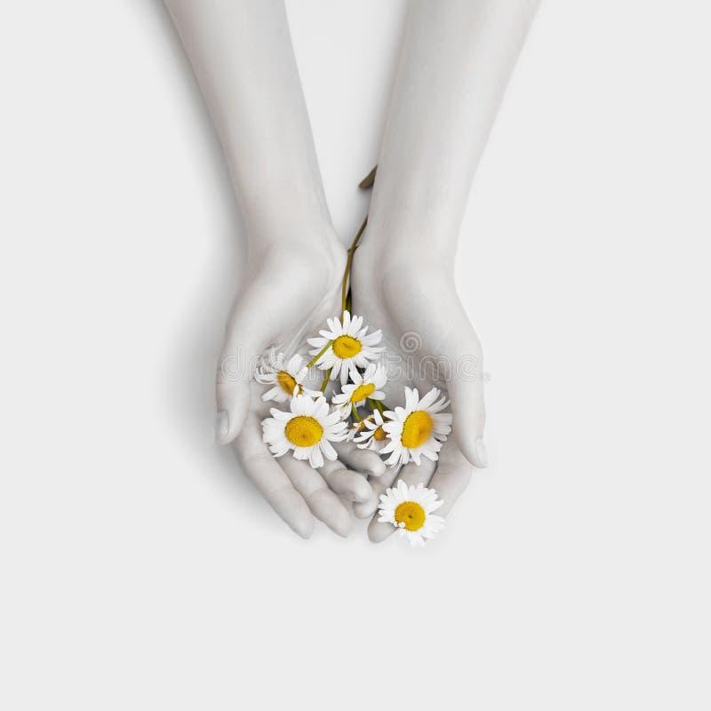 Arbeiten Sie Handkunstkamillen-Naturkosmetikfrauen, weiße schöne Kamillenblumenhand mit hellem Kontrastmake-up, Handpflege um stockfoto