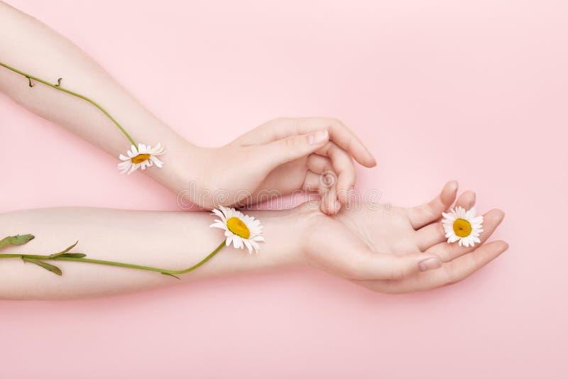Arbeiten Sie Handkunstkamillen-Naturkosmetikfrauen, weiße schöne Kamillenblumenhand mit hellem Kontrastmake-up, Handpflege um lizenzfreies stockbild