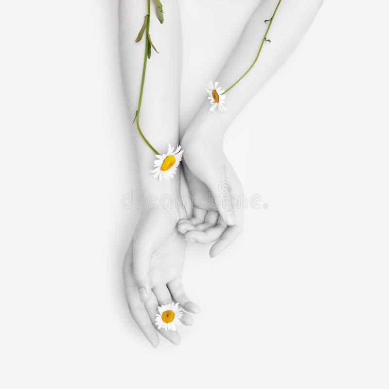 Arbeiten Sie Handkunstkamillen-Naturkosmetikfrauen, weiße schöne Kamillenblumenhand mit hellem Kontrastmake-up, Handpflege um stockbilder