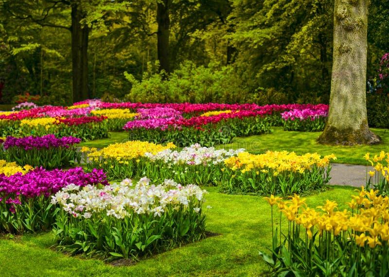 Arbeiten Sie in Keukenhof, in den bunten Tulpenblumen und in den Bäumen im Garten netherlands lizenzfreie stockfotos