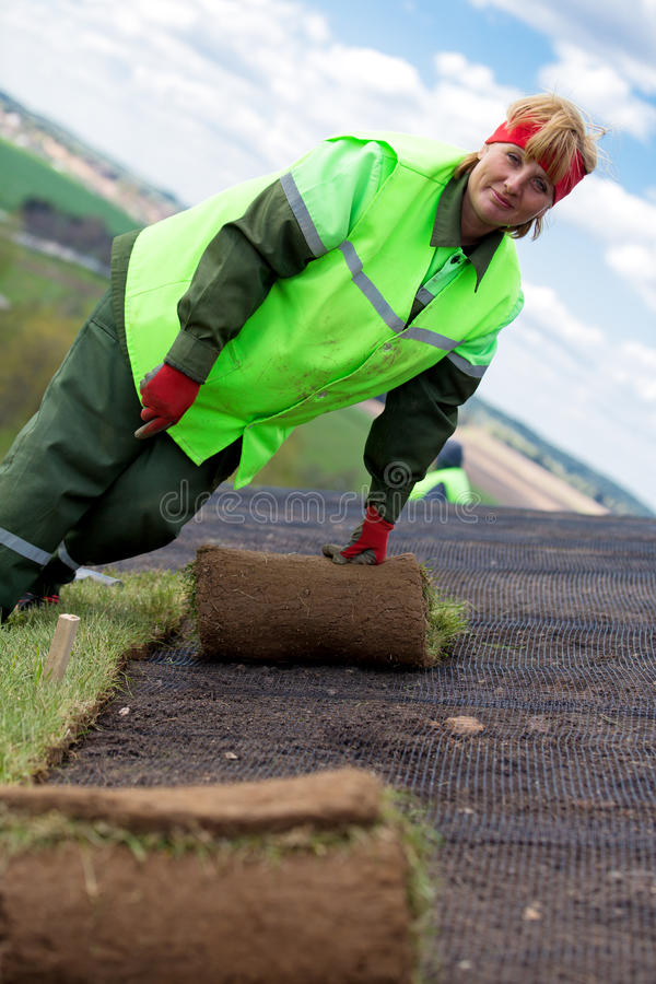 Arbeitnehmerin, die Rasen gerolltes Gras legt stockfotos
