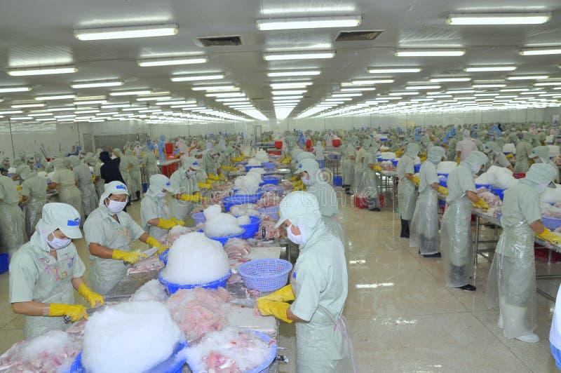Arbeitskräfte arbeiten in einer Verarbeitungsanlage der Meeresfrüchte in Tien Giang, eine Provinz im der Mekong-Delta von Vietnam lizenzfreies stockfoto