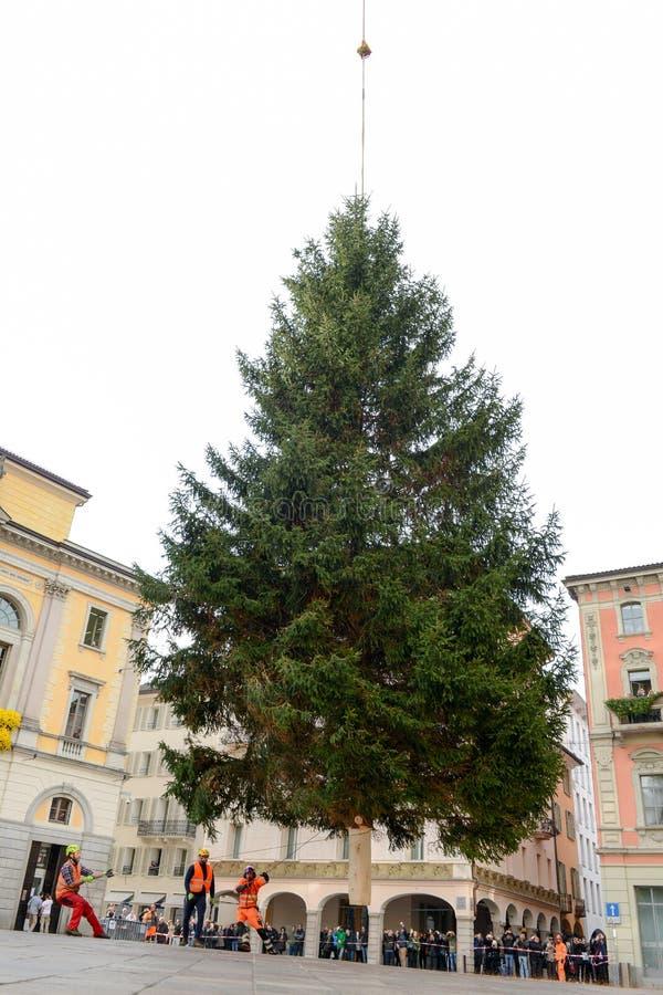 Arbeitskräfte, die einen Weihnachtsbaum bewegen, der von einem Hubschrauber niedergelegt wird stockbild