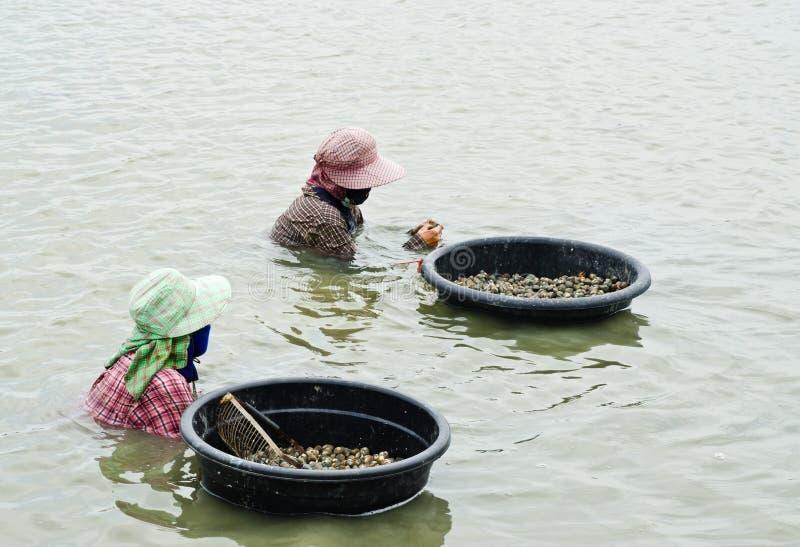 Download Arbeitskräfte, Die Herzmuscheln Ernten Stockfoto - Bild von bewirtschaften, asien: 26370328