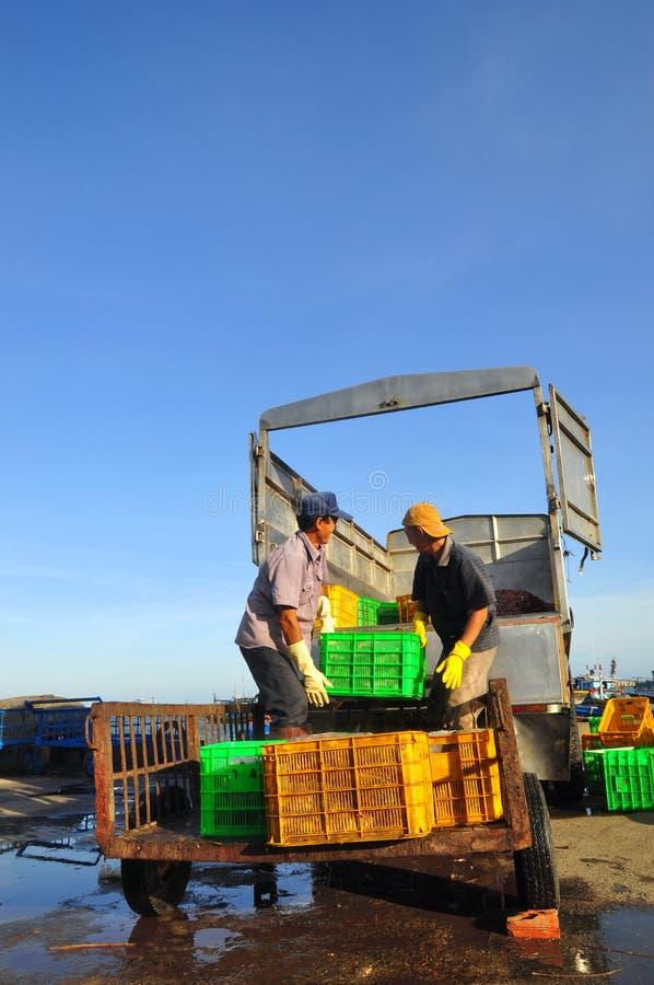 Arbeitskräfte laden Futterfische auf den LKW zur Futtermühle in Lagi-Seehafen lizenzfreies stockfoto
