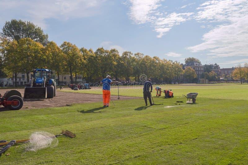 Arbeitskräfte, welche die Grasrollen im Park am sonnigen Tag legen stockbild