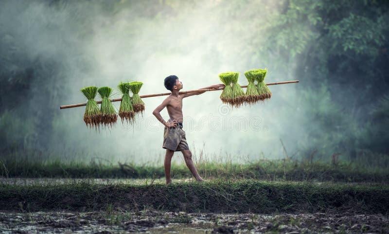 Arbeitskraft auf dem Reisgebiet lizenzfreie stockfotografie