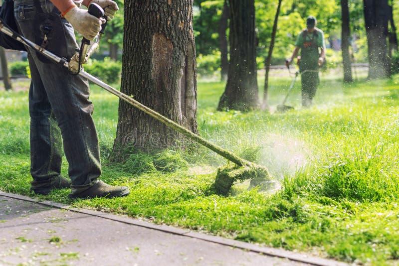 Arbeitskraft, die hohes Gras mit elektrischem oder Treibstoffrasentrimmer im Stadtpark oder -hinterhof mäht Gartenarbeitsorgfaltw stockfotos