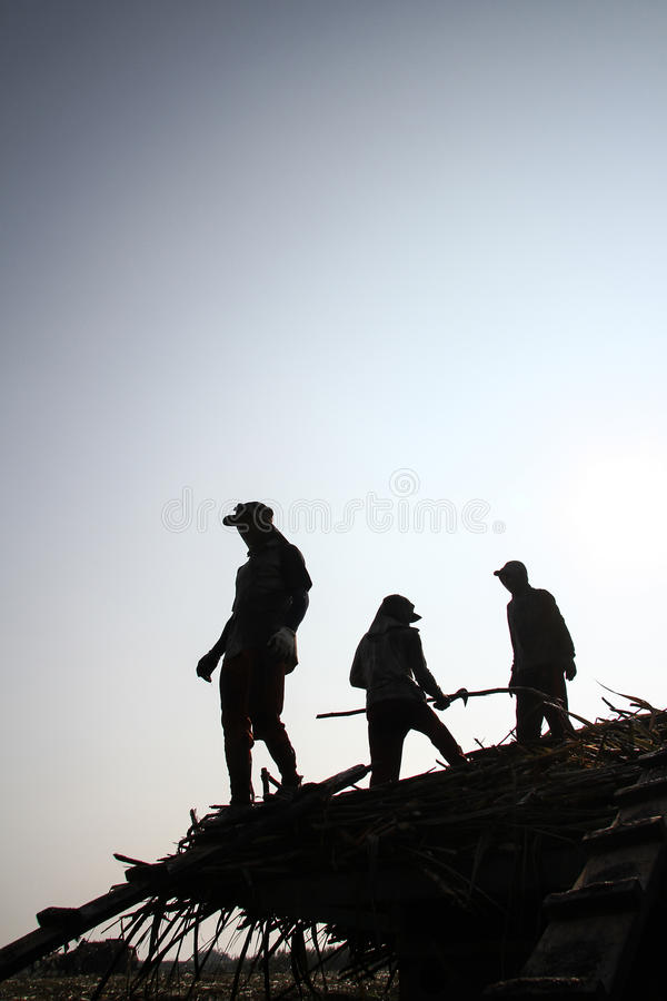 Arbeitskraft, die Stock im LKW transportiert stockfotografie