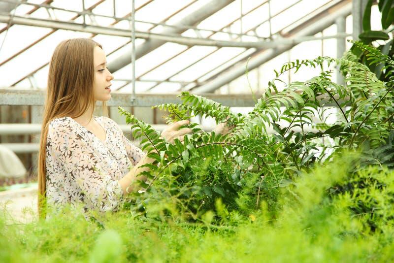 Arbeitskraft mit Tablette nahe grüner tropischer Anlage im Gewächshaus lizenzfreie stockfotografie
