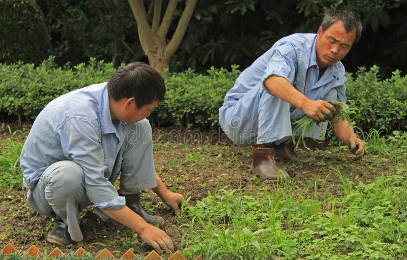 Arbeitskraft zwei säubern Garten des Rasens öffentlich von stockbilder