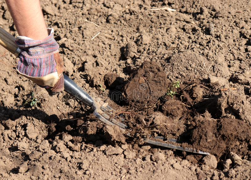 Arbeitslandwirt im Garten Organisches Düngemittel für manuring Boden, Feld für im Frühjahr pflanzen vorbereitend, Biolandwirtscha stockbilder
