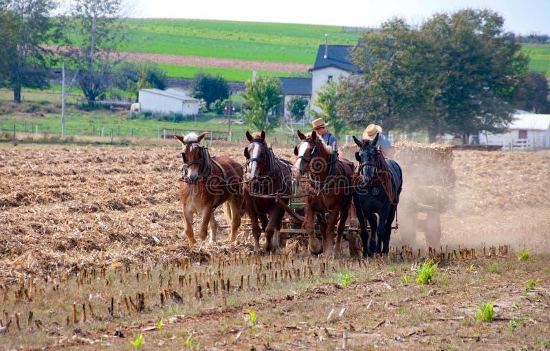 Arbeta för Amish bönder arkivbilder