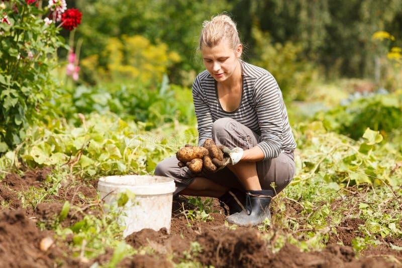 Arbeta i trädgård royaltyfri fotografi