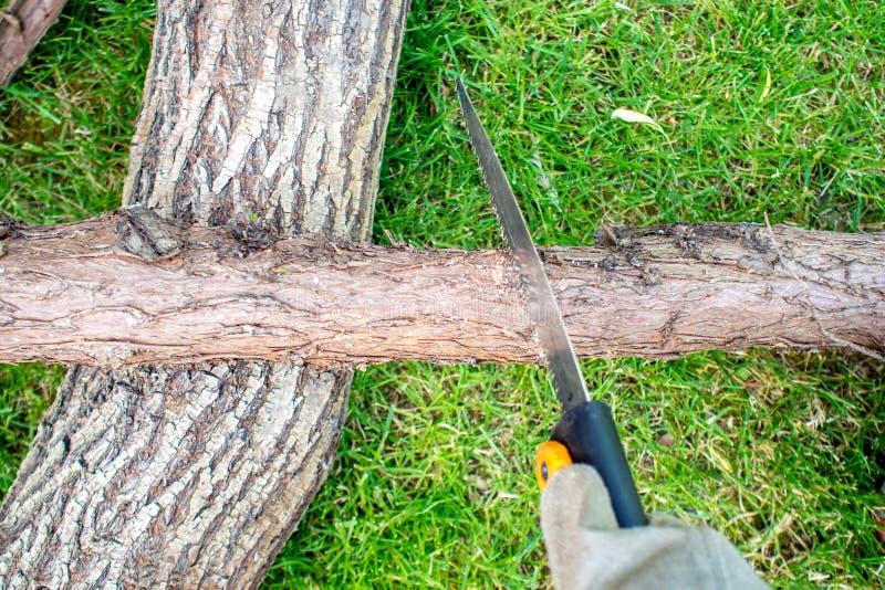 Arbeta i trädgård, en mann som sågar en chump av trä arkivfoton