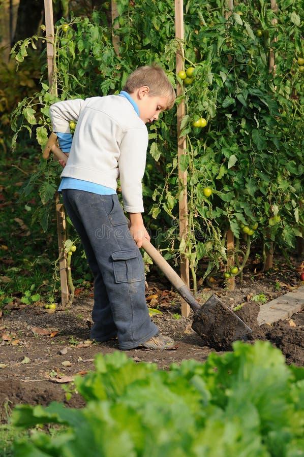Download Arbeta i trädgården fotografering för bildbyråer. Bild av grönsaker - 27276179