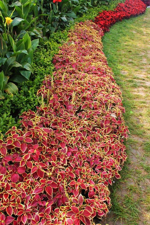 Download Arbeta i trädgården fotografering för bildbyråer. Bild av blommor - 27284909