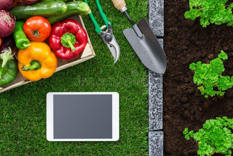 Arbeta i trädgården app royaltyfria foton