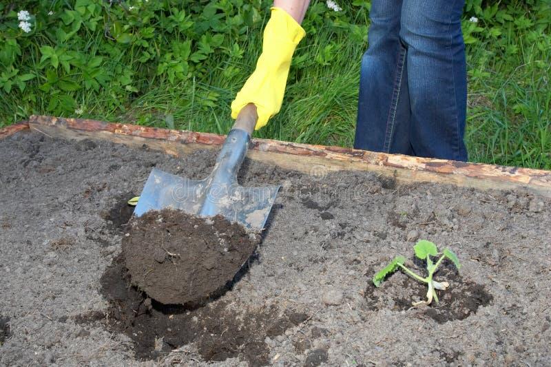 arbeta i trädgården arbete royaltyfria bilder
