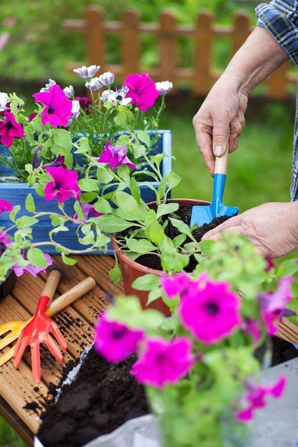 Arbeta i trädgården begrepp royaltyfria foton