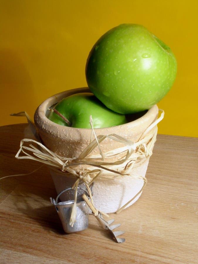 Arbeta I Trädgården För äpplen Royaltyfri Foto