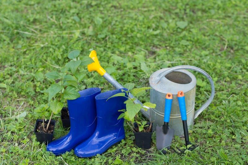 arbeta i trädgården för begrepp Krattar den trädgårds- spateln för gummi, stövlar, den bevattna krukan och den unga busken för at royaltyfria foton