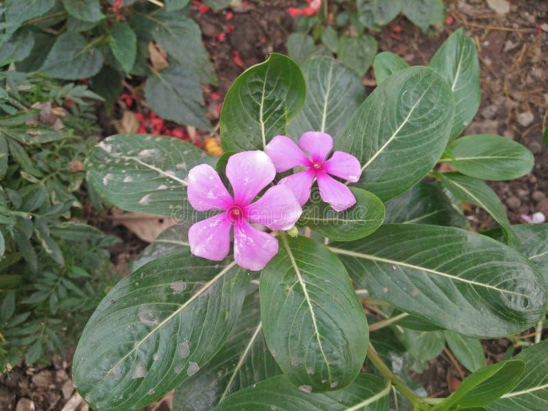 Arbeta i trädgården för hjärtahandlag royaltyfri fotografi
