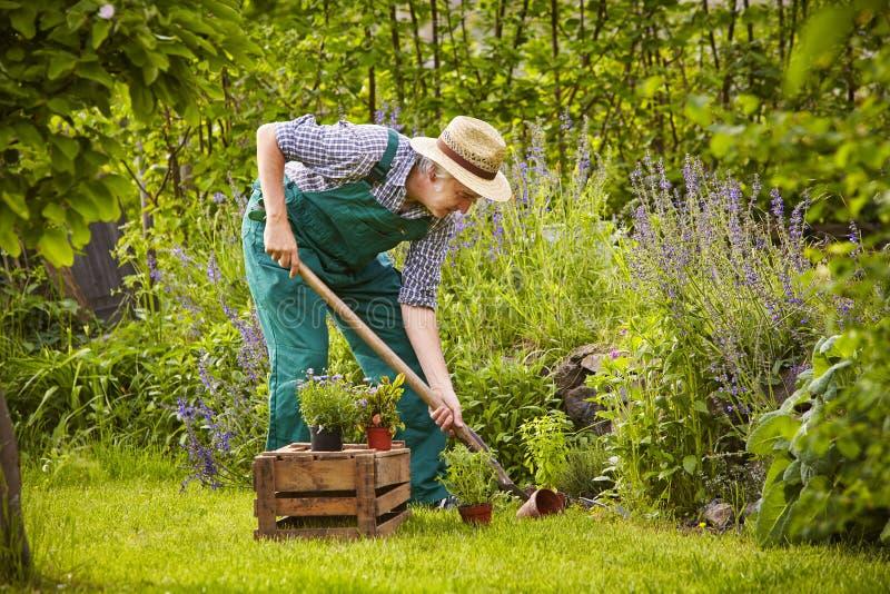 Arbeta i trädgården för man fotografering för bildbyråer