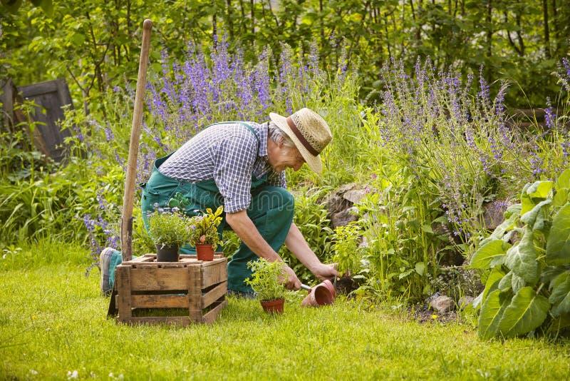 Arbeta i trädgården för man arkivbild