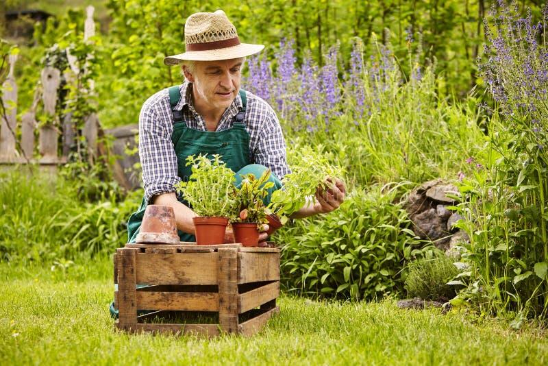 Arbeta i trädgården för manspjällåda arkivbild