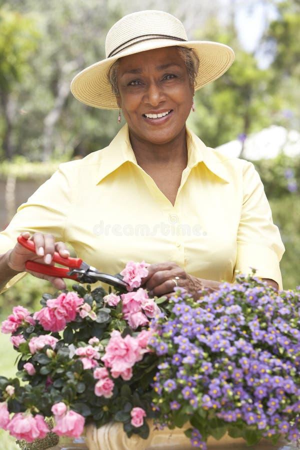 arbeta i trädgården hög kvinna royaltyfria bilder