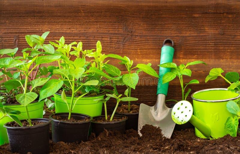 Arbeta i trädgården hjälpmedel, lavendel, rosmary, jordgubbeväxter och plantor på jord arkivbilder