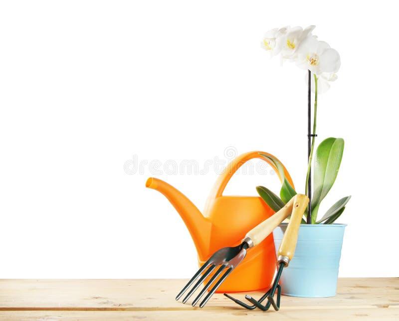 Arbeta i trädgården hjälpmedel med orkidéblomman royaltyfri bild
