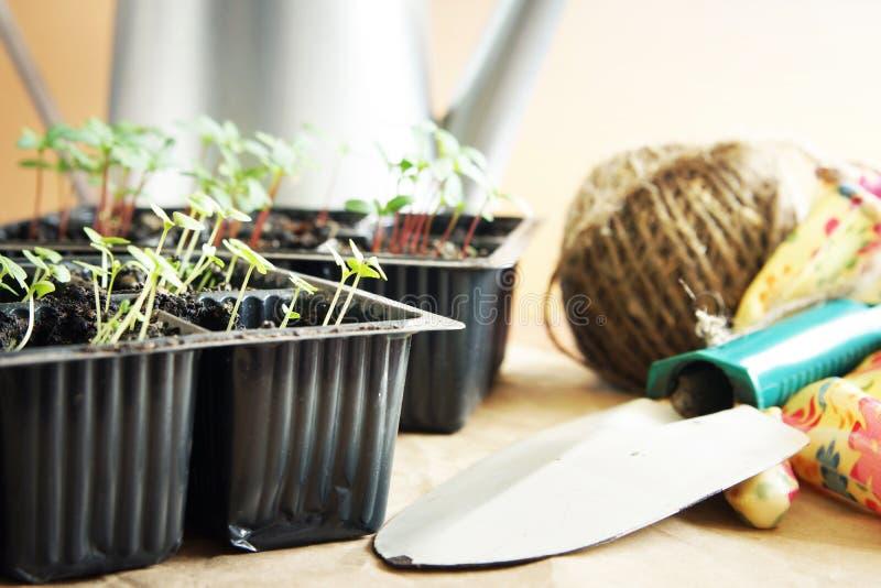 Arbeta i trädgården hjälpmedel och gräsplanplantor arkivbilder