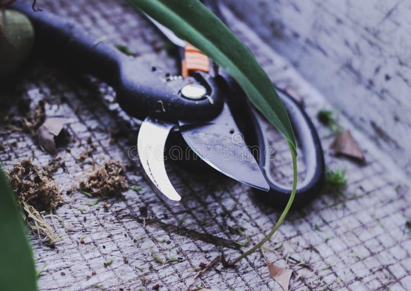 Arbeta i trädgården hjälpmedel skäraren, sax transplantera blommor i vår arkivfoton