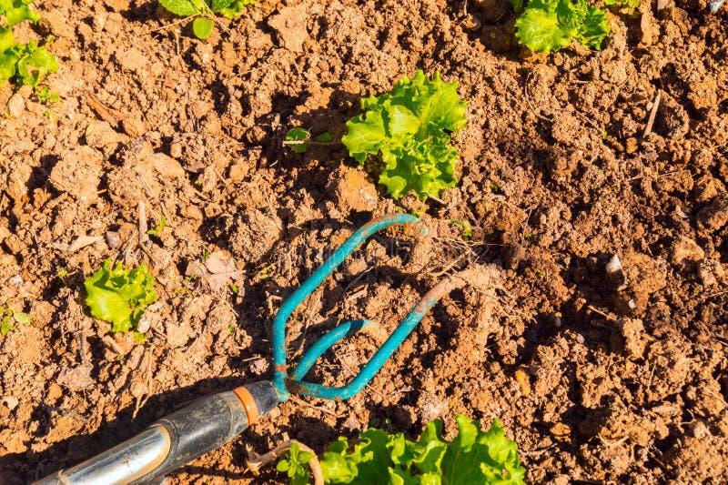Arbeta i trädgården hjälpmedlet på den plöjde jordningen arkivbilder