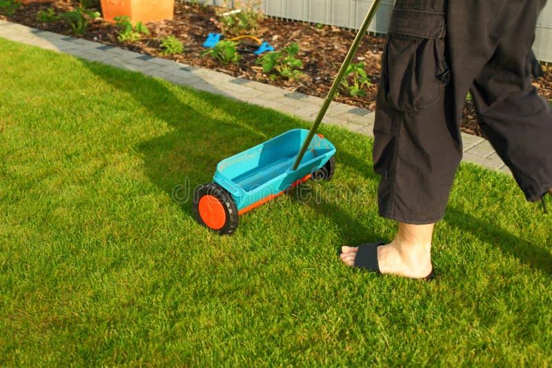 arbeta i trädgården lawn för gödsla royaltyfria bilder