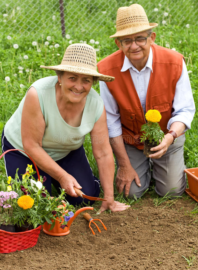 arbeta i trädgården lyckliga sunda pensionärer arkivbilder
