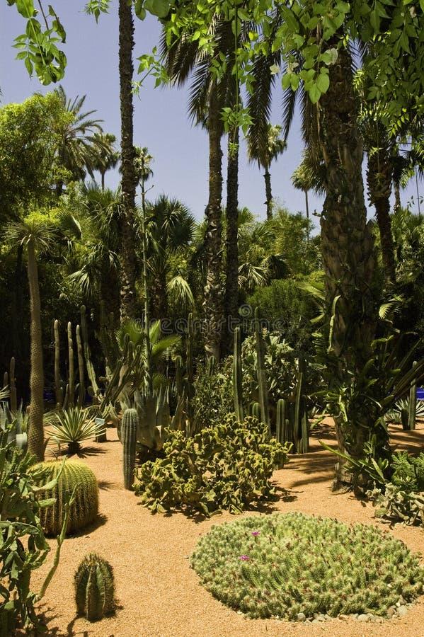 arbeta i trädgården majorelle royaltyfri fotografi