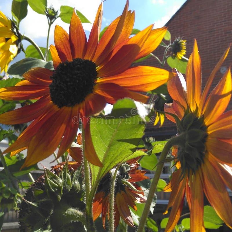 arbeta i trädgården mitt arkivfoton
