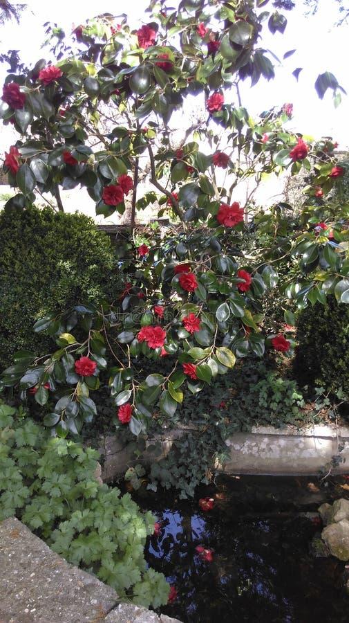 arbeta i trädgården mitt royaltyfria foton