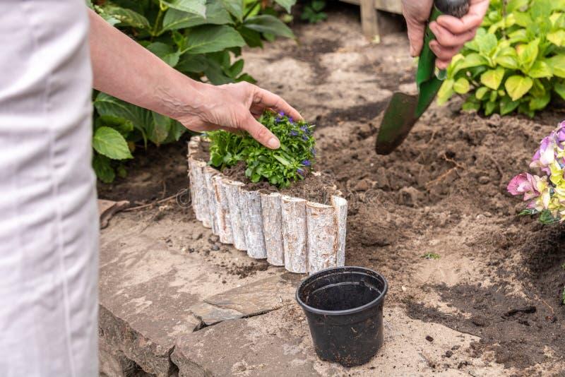 Arbeta i trädgården och fyllande krukor för hög kvinna med blommor royaltyfria foton