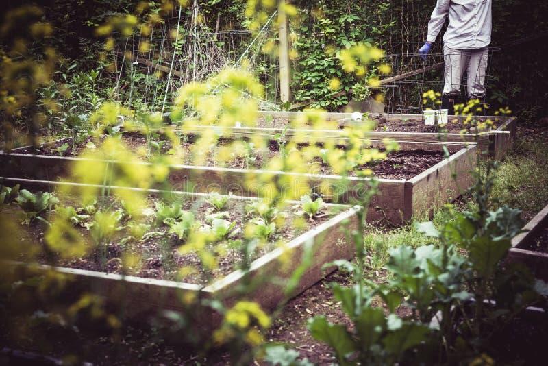 Arbeta i trädgården och plantera på starten av säsongen royaltyfri foto
