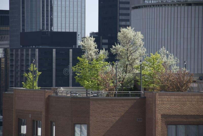 arbeta i trädgården rooftopen arkivfoton