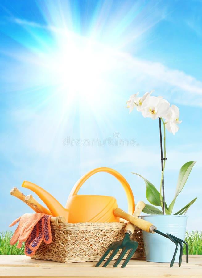 Arbeta i trädgården sammansättning med den vita blomman och trädgårds- hjälpmedel i en vide- korg royaltyfri bild