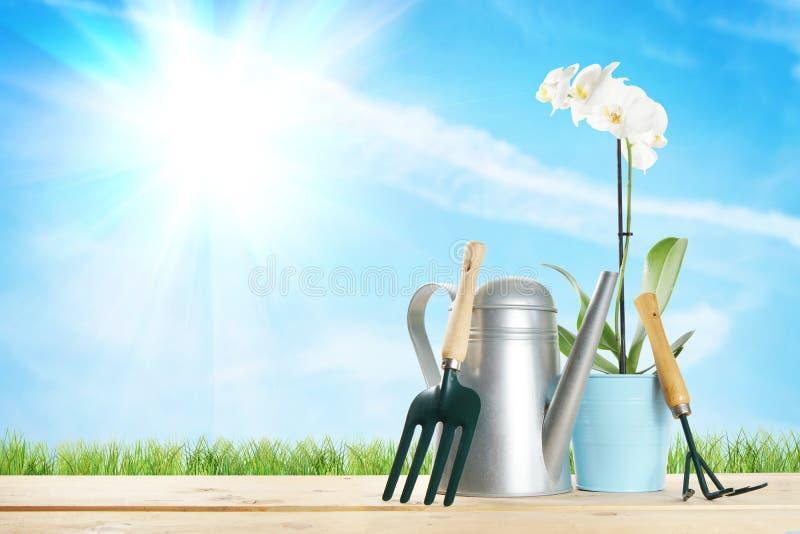 Arbeta i trädgården sammansättning med en blomma och olika trädgårds- hjälpmedel royaltyfria foton