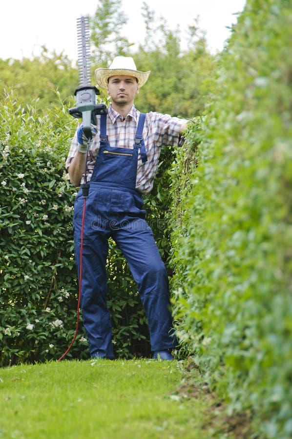 Arbeta i trädgården som klipper häcken royaltyfri fotografi