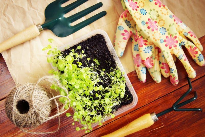 Arbeta i trädgården stilleben med gröna plantor och hjälpmedel arkivbild